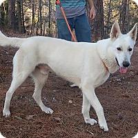 Adopt A Pet :: Denali - Kittery, ME