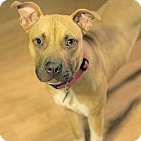 Adopt A Pet :: Leeloo - Austin, TX