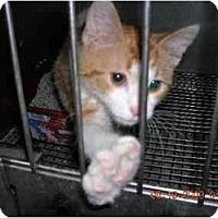 Adopt A Pet :: Duffy - Union, SC