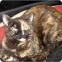 Adopt A Pet :: Lyla - Xenia, OH