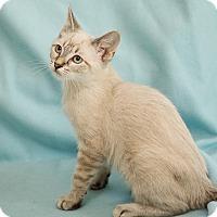 Adopt A Pet :: Smee - San Antonio, TX
