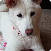 Adopt A Pet :: Eko - Manassas, VA