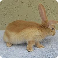 Adopt A Pet :: Ivin - Bonita, CA