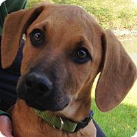 Adopt A Pet :: Givens - Pleasant Plain, OH