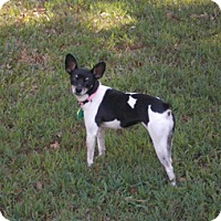 Adopt A Pet :: Lucie - of, WI