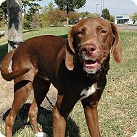 Adopt A Pet :: Jonny - Lewisville, IN
