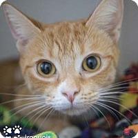 Adopt A Pet :: Iroquois - Merrifield, VA