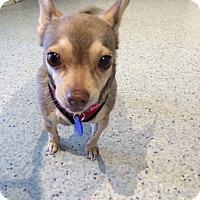 Adopt A Pet :: Little Mermaid - Los Angeles, CA
