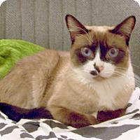 Adopt A Pet :: Cherokee - Chandler, AZ