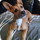 Adopt A Pet :: Pumpkin (DD)