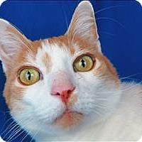 Adopt A Pet :: Flynn - Sherwood, OR