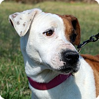 Adopt A Pet :: Paige~ meet me! - Glastonbury, CT