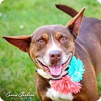 Adopt A Pet :: Kaysee - ADOPTED! - Zanesville, OH