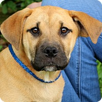 Adopt A Pet :: Bo Duke~adopted! - Glastonbury, CT