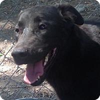 Adopt A Pet :: Callie Rea - Albemarle, NC