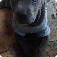 Adopt A Pet :: Sylvia - Boston, MA