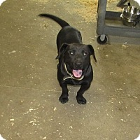 Adopt A Pet :: Buddy Boy - Walthill, NE