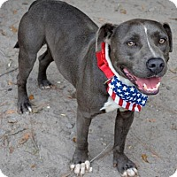 Adopt A Pet :: Colorado - Ridgeland, SC