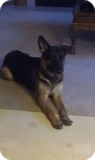 German Shepherd Dog Mix Dog for adoption in Rockford, Illinois - Zoey