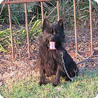 Adopt A Pet :: ZENA - Newburgh, NY