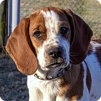 Adopt A Pet :: Billy - Fairfax, VA