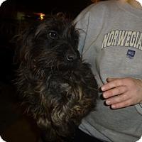 Adopt A Pet :: Tosha or LuAnnne - Glastonbury, CT