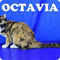 Adopt A Pet :: Octavia - Carencro, LA