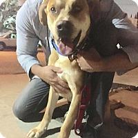 Adopt A Pet :: Butch - Beverly Hills, CA