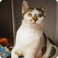 Adopt A Pet :: Ann - Naperville, IL