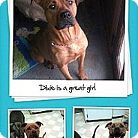 Adopt A Pet :: Dixie - maryville, TN