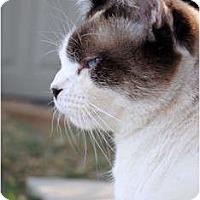 Adopt A Pet :: Tobie - Palmdale, CA