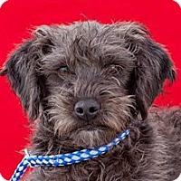 Adopt A Pet :: Arnie - Tumwater, WA