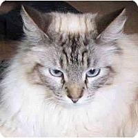 Adopt A Pet :: Khalil - Davis, CA