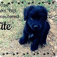 Adopt A Pet :: Jose - Gadsden, AL