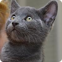 Adopt A Pet :: Pasha - Davis, CA