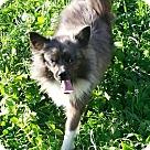 Adopt A Pet :: Nickles
