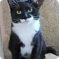 Adopt A Pet :: Zoe - Devon, PA