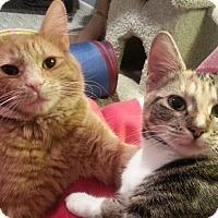 Adopt A Pet :: Harrison - Portland, OR