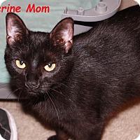 Adopt A Pet :: Katherine - Plainville, MA