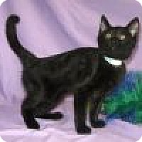 Adopt A Pet :: Phantasia - Powell, OH