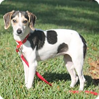 Adopt A Pet :: Thelma II - Tampa, FL