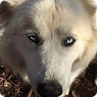 Adopt A Pet :: Mollie - Brattleboro, VT