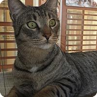 Adopt A Pet :: Wingnut - Coronado, CA
