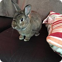 Adopt A Pet :: Lola V - Conshohocken, PA