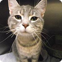 Adopt A Pet :: Meka - Chambersburg, PA