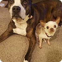 Adopt A Pet :: Roman and Spike (Courtesy Listing) - South Amana, IA