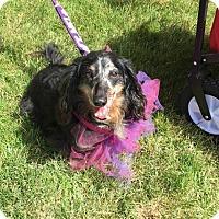 Adopt A Pet :: Bow - Boise, ID