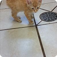 Adopt A Pet :: Luella - Chippewa Falls, WI
