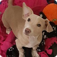 Adopt A Pet :: Penny's Pudgy - Las Vegas, NV