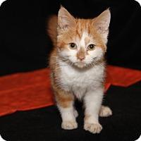 Adopt A Pet :: Sonny - Marietta, OH